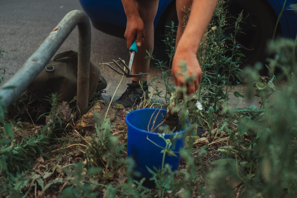 Sustainable living: plant a garden
