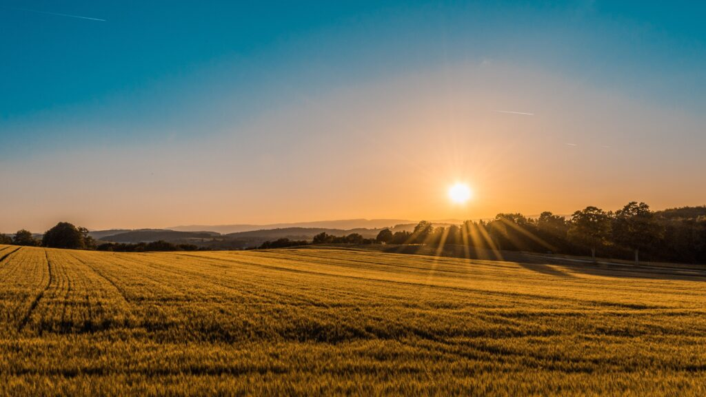 the sun coming up over a field