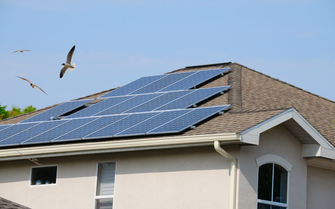 How To Bird-Proof Your Solar Panel Setup (DIY Guide)